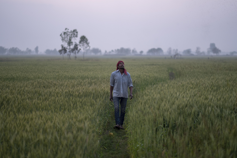Lorik Prasad Yadav, of Sugauli Birta, Nepal, walks through a field of wheat early in the morning before beginning work for the day. (AtlasNetwork.org Photo / Bernat Parera)