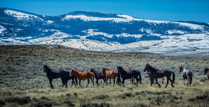 Wild horse stock